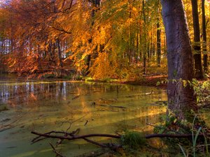 Lago forest - HDR